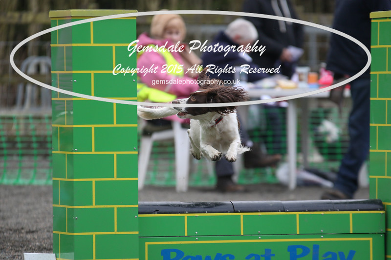 Paws at Play 27th February 2016-4031