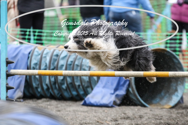 Paws at Play 27th February 2016-4042