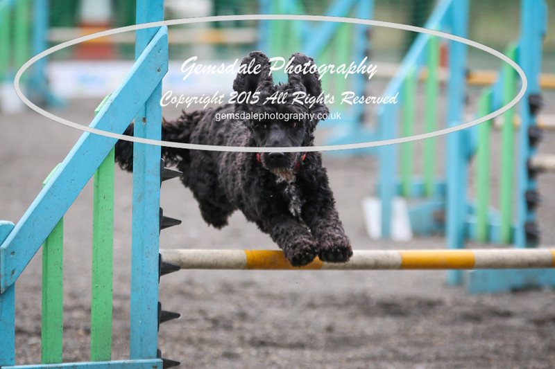 Paws at Play 27th February 2016-4027
