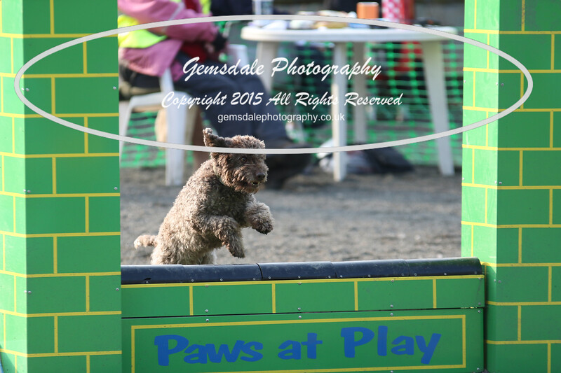 Paws at Play 27th February 2016-4000
