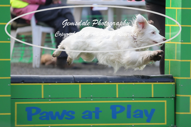 Paws at Play 27th February 2016-4016