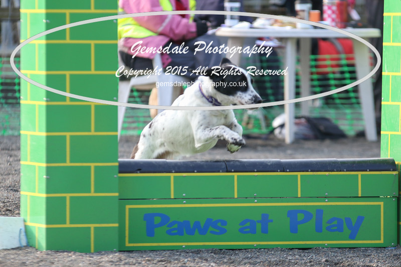 Paws at Play 27th February 2016-4003