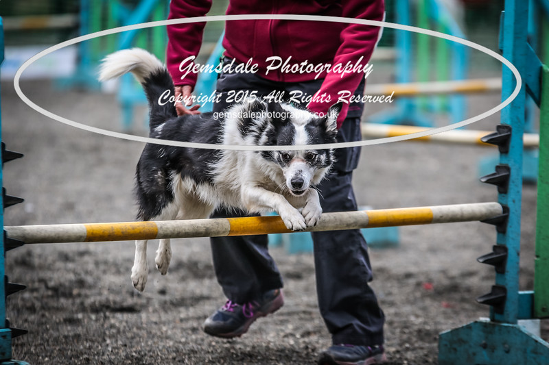 Paws at Play 27th February 2016-4023