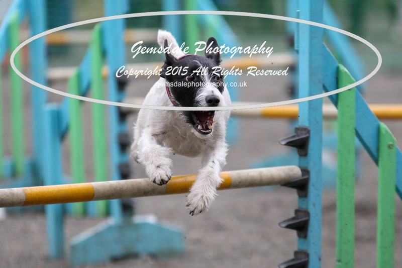Paws at Play 27th February 2016-4038