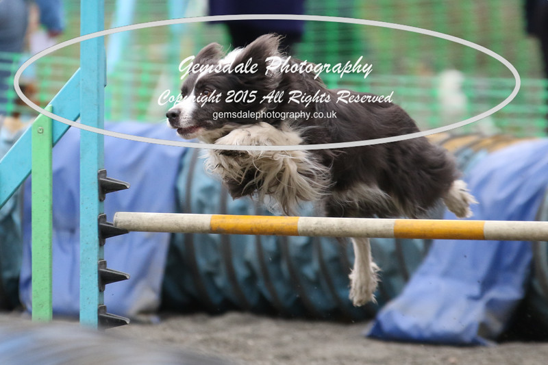 Paws at Play 27th February 2016-4039