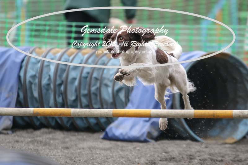 Paws at Play 27th February 2016-4028