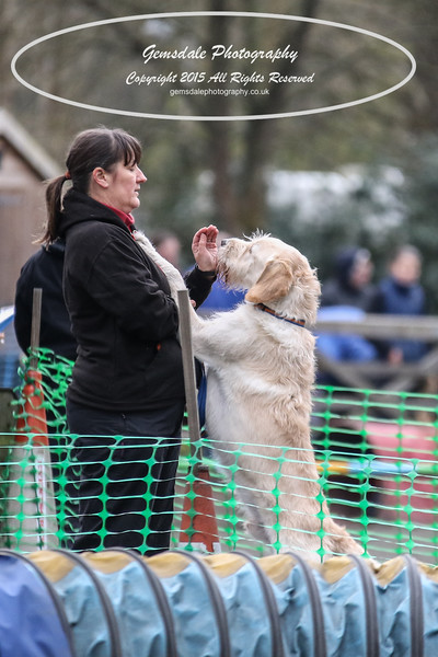 Paws at Play 27th February 2016-4032