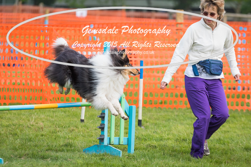 Paws at Play Merrist Wood 2016-30