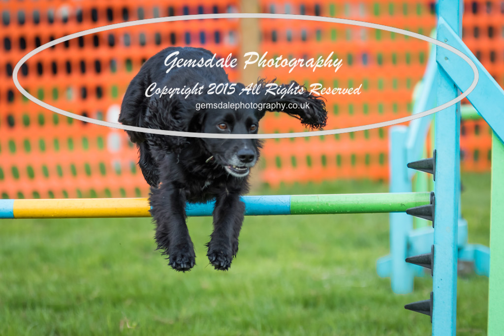 Paws at Play Merrist Wood 2016-27