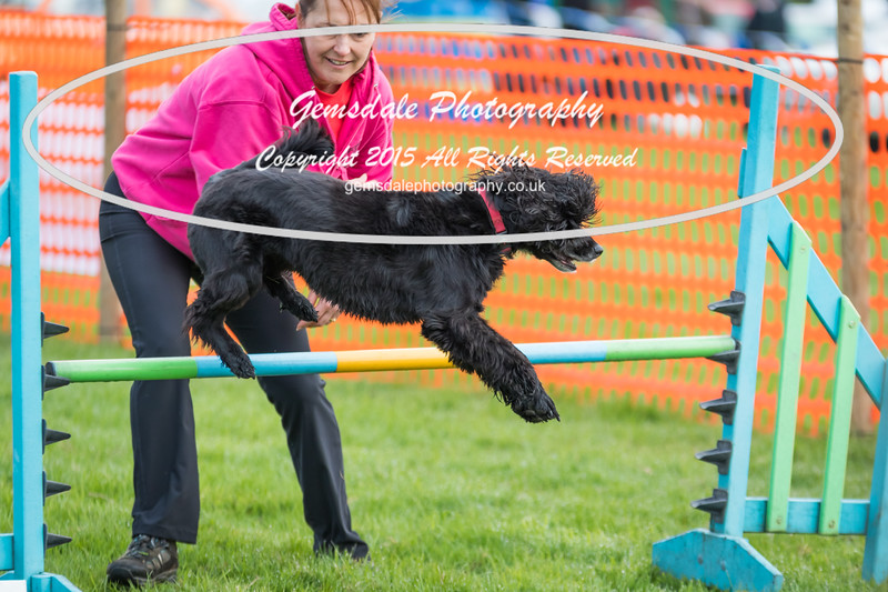 Paws at Play Merrist Wood 2016-28
