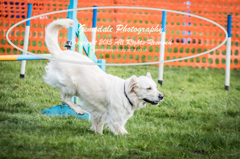 Paws at Play Merrist Wood 2016-32