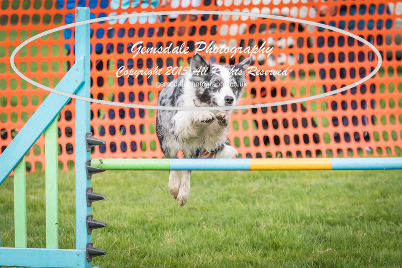 Paws at Play Merrist Wood 2016-37