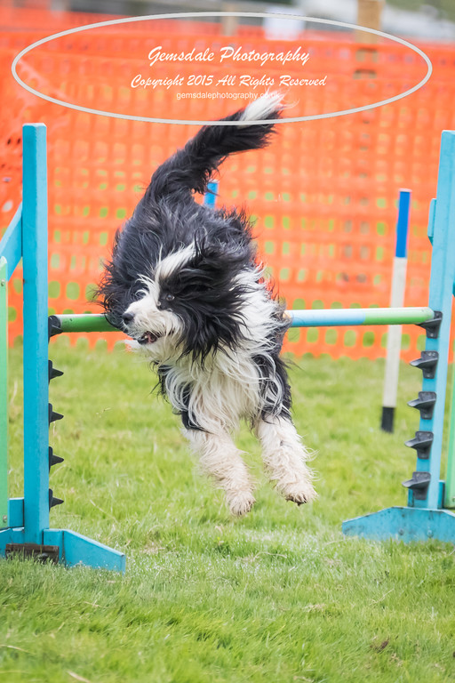 Paws at Play Merrist Wood 2016-7