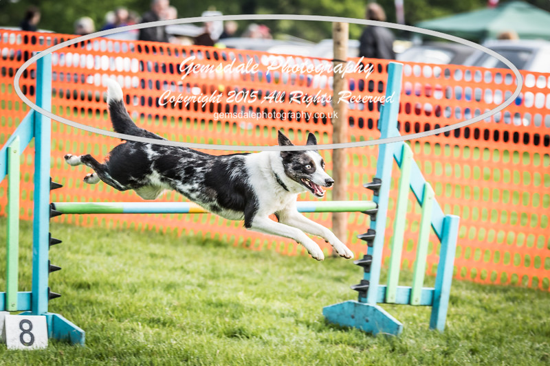 Paws at Play Merrist Wood 2016-47