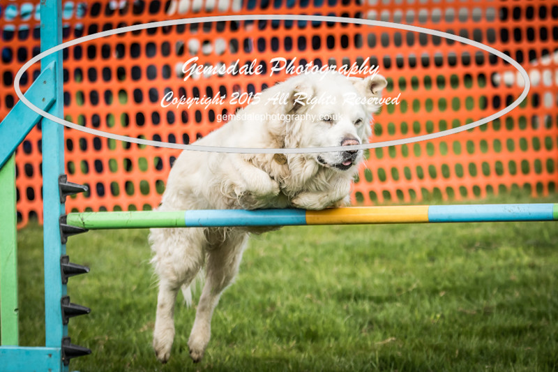 Paws at Play Merrist Wood 2016-24