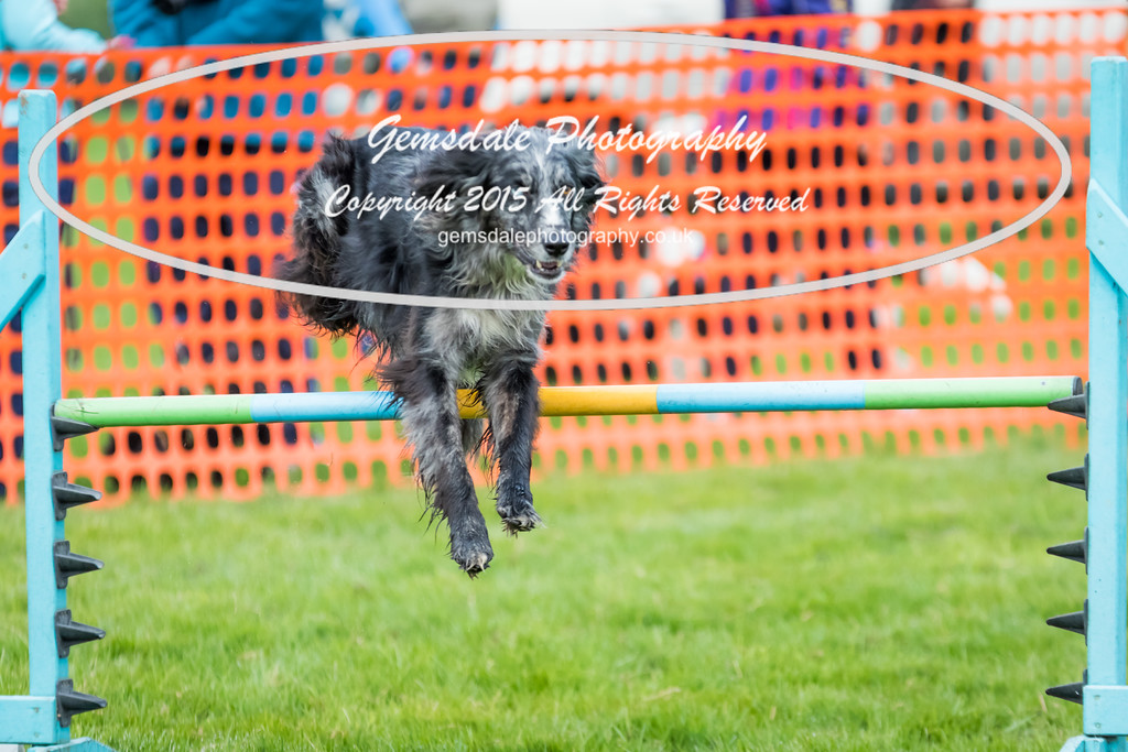 Paws at Play Merrist Wood 2016-14