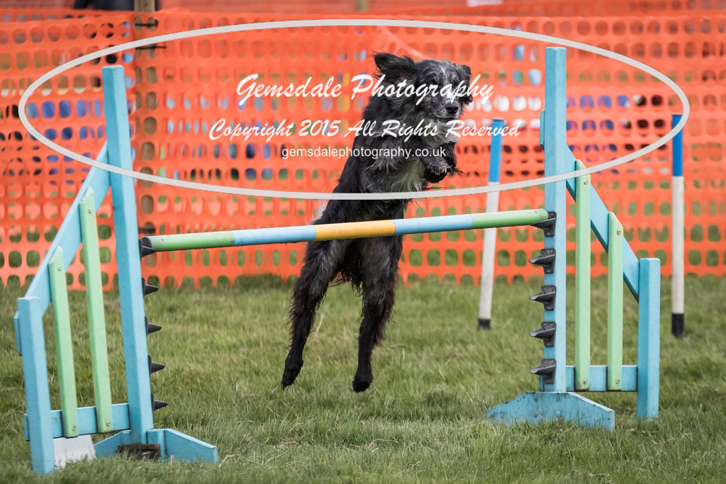 Paws at Play Merrist Wood 2016-15