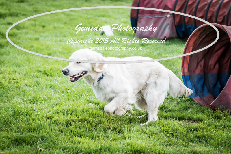 Paws at Play Merrist Wood 2016-34