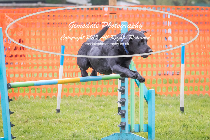 Paws at Play Merrist Wood 2016-5