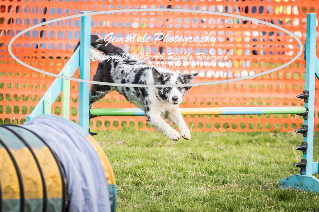 Paws at Play Merrist Wood 2016-35