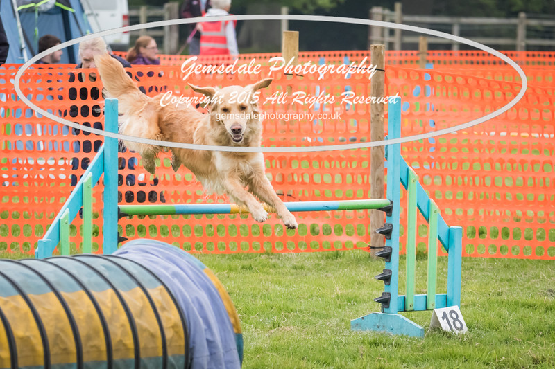 Paws at Play Merrist Wood 2016-1