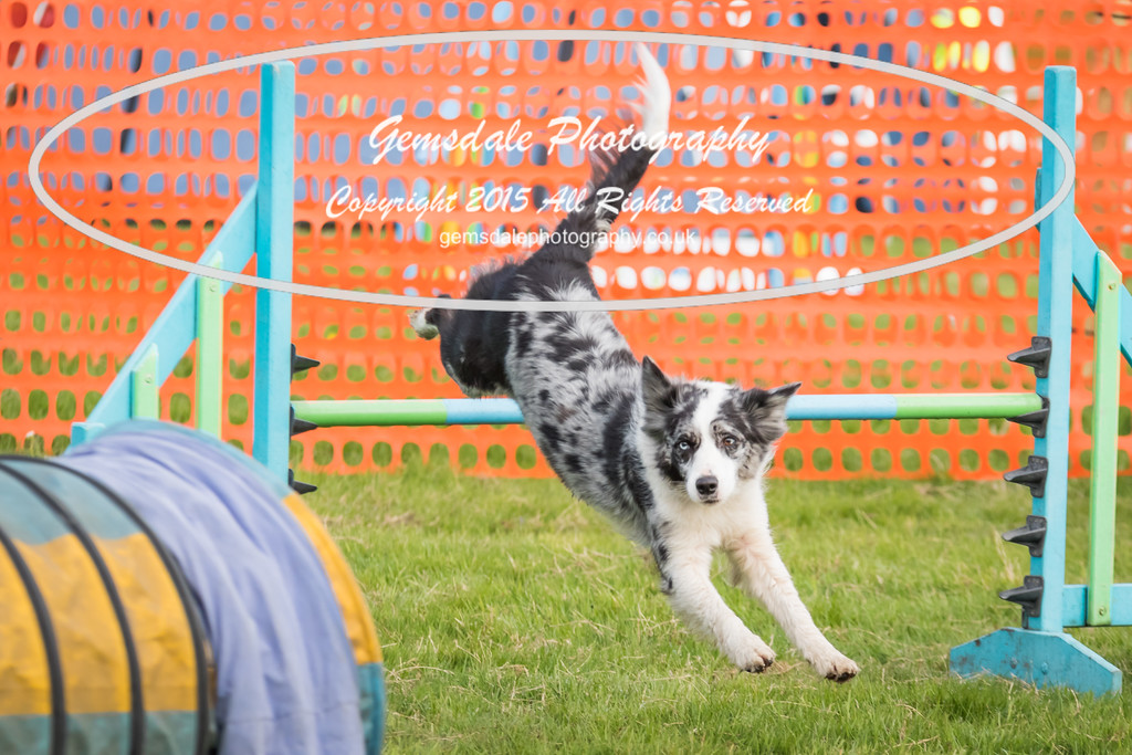 Paws at Play Merrist Wood 2016-36