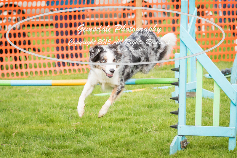 Paws at Play Merrist Wood 2016-41