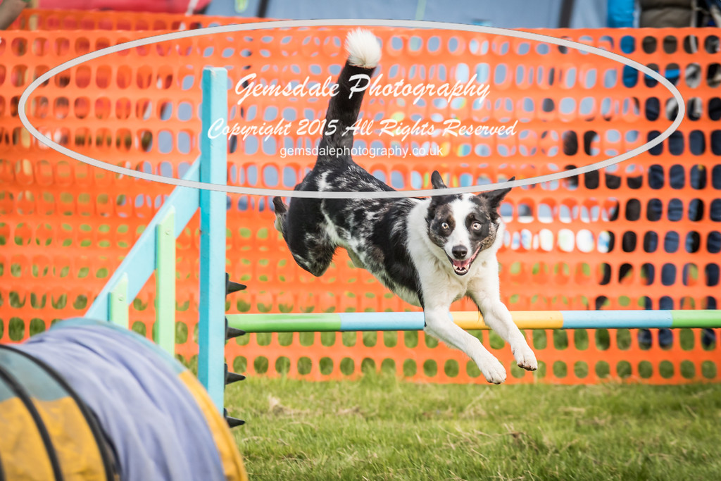 Paws at Play Merrist Wood 2016-45