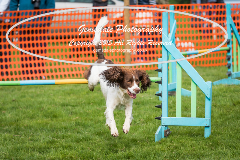 Paws at Play Merrist Wood 2016-23