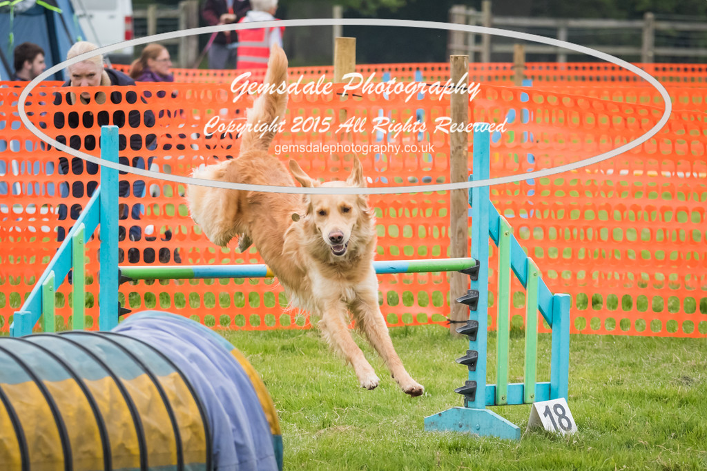 Paws at Play Merrist Wood 2016-2