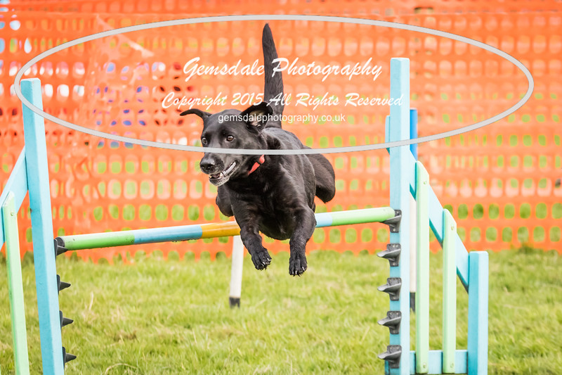 Paws at Play Merrist Wood 2016-18