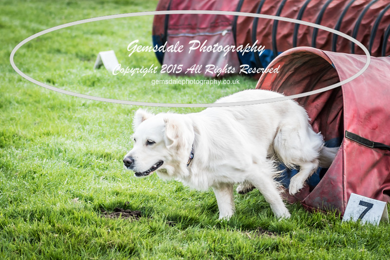 Paws at Play Merrist Wood 2016-33