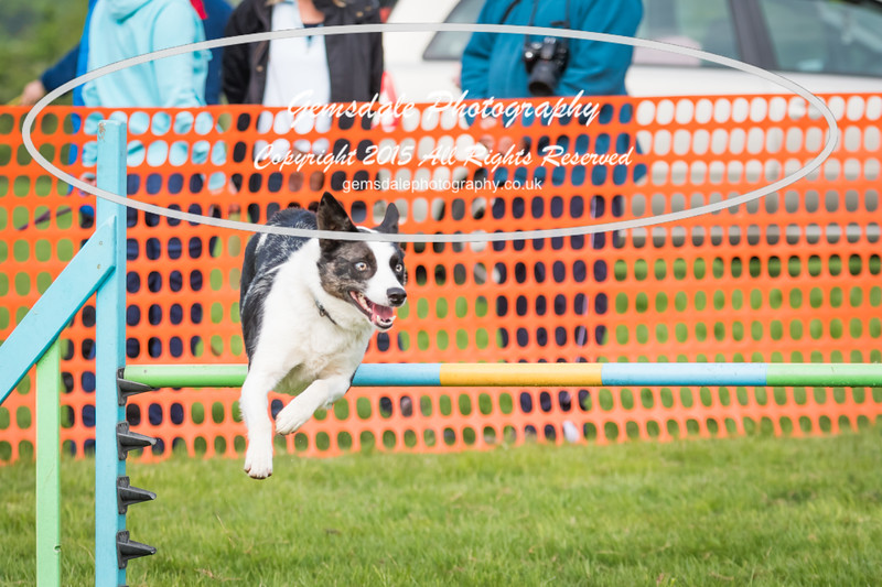 Paws at Play Merrist Wood 2016-46