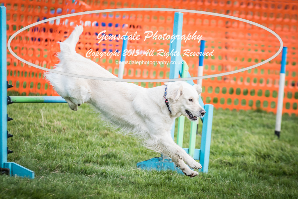 Paws at Play Merrist Wood 2016-31