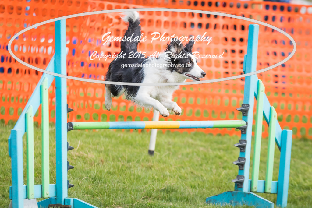 Paws at Play Merrist Wood 2016-43