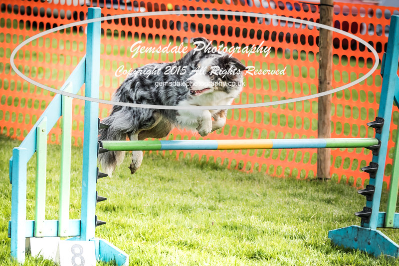 Paws at Play Merrist Wood 2016-42