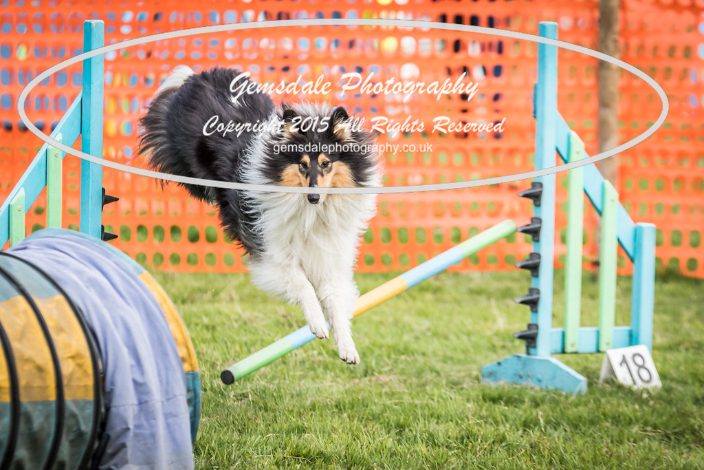 Paws at Play Merrist Wood 2016-29