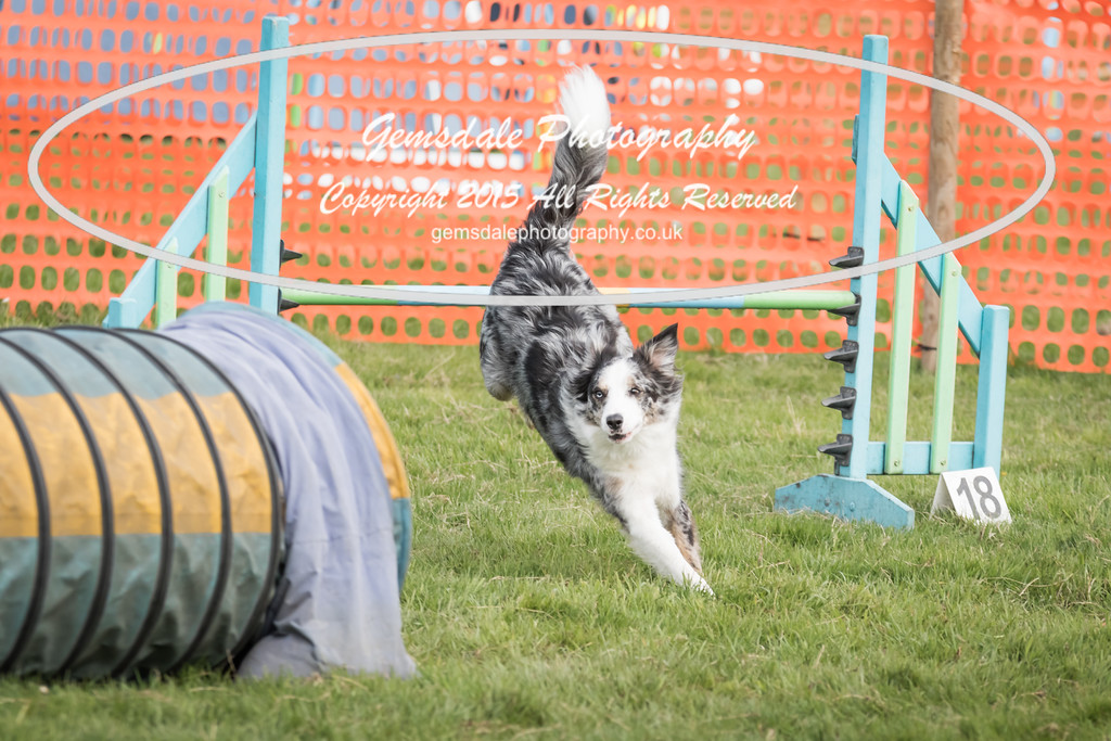 Paws at Play Merrist Wood 2016-40