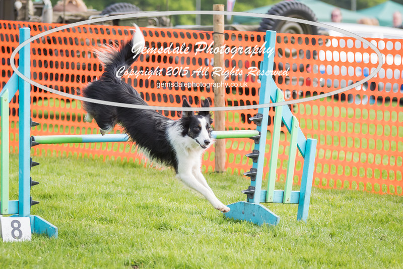 Paws at Play Merrist Wood 2016-44