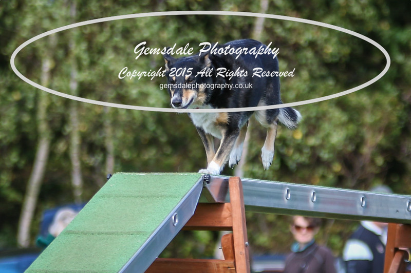 Southdowns Agility 25th September 2016-1038
