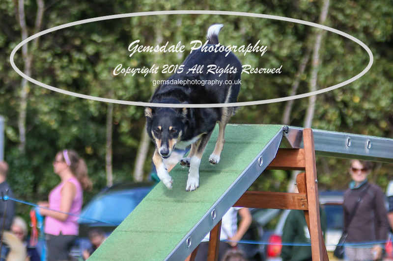 Southdowns Agility 25th September 2016-1037