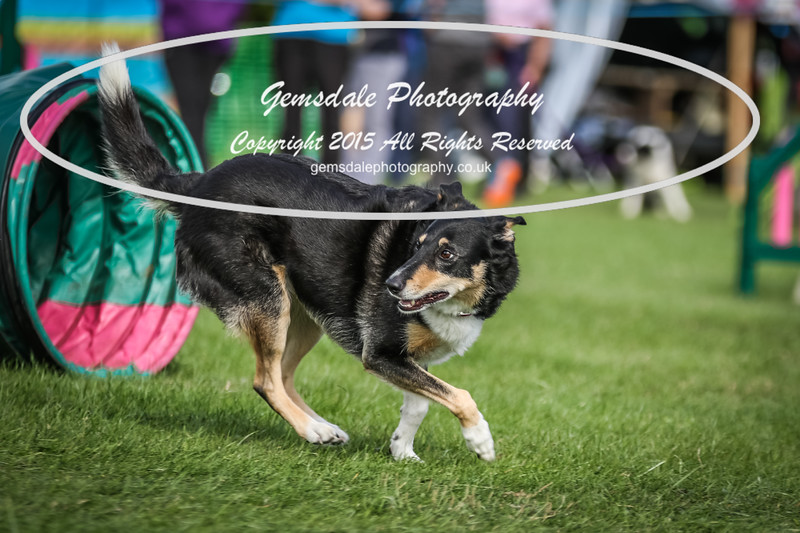 Southdowns Agility 25th September 2016-1039