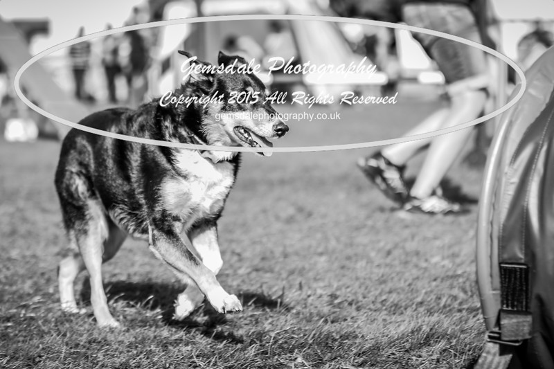 Southdowns Agility 25th September 2016-1036