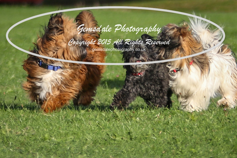 Southdowns Agility 25th September 2016-1019