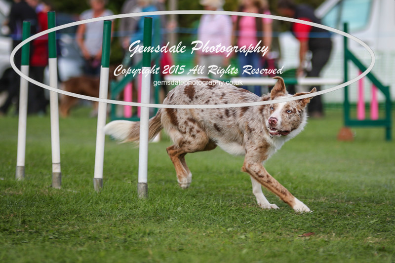 Southdowns Agility 25th September 2016-1017