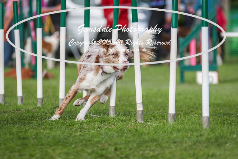 Southdowns Agility 25th September 2016-1013