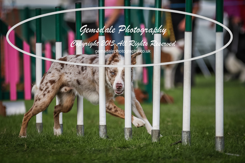 Southdowns Agility 25th September 2016-1012