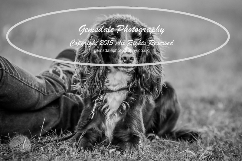 Southdowns Agility 25th September 2016-1004