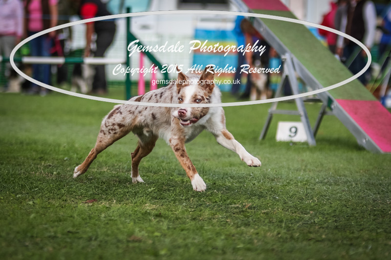 Southdowns Agility 25th September 2016-1018