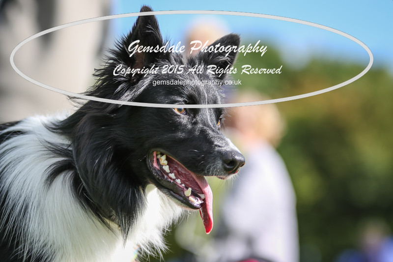 Southdowns Agility 25th September 2016-1009